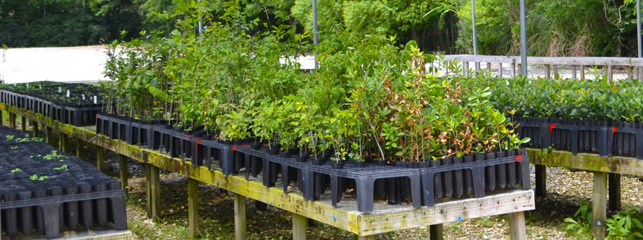 Barataria-Terrebonne National Estuary Program: Native Plants 1