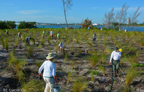 Indian River Lagoon National Estuary Program: Restoration